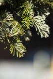 Красивая предпосылка ели зимы Стоковое Изображение RF