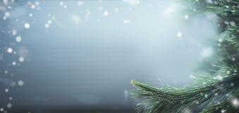 Красивая предпосылка знамени зимы с ветвями и снегом сосны Зимние отдыхи и рождество Стоковое Фото