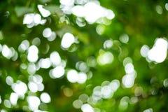 Красивая предпосылка нерезкости, bokeh на природе Стоковые Изображения