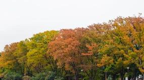 Красивая предпосылка осени multicolor дерева осени в национальном парке ueno в Японии Стоковое Фото