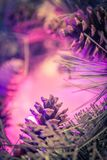 Красивая предпосылка рождества с иглами сосны и конусы сосны закрывают вверх Стоковые Изображения RF