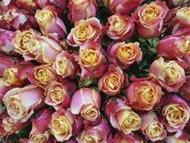 Красивая предпосылка романтичная, замужество роз, свежесть Стоковое Изображение