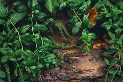 Красивая предпосылка темных ых-зелен листьев и коричневого камня стоковые фотографии rf