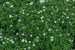 Красивая предпосылка цветков, флористическая предпосылка Стоковая Фотография RF