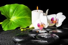 Красивая предпосылка белого цветка орхидеи, фаленопсис курорта, g Стоковое фото RF