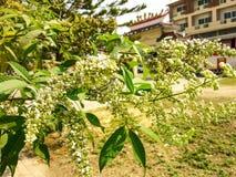 Красивая предпосылка белого цветка Стоковые Фото