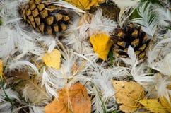 Красивая предпосылка пер и рему гусыни на сухом падении Стоковые Изображения RF