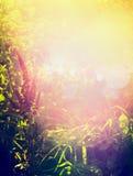 Красивая предпосылка природы осени или лета с травами, травой и цветками в саде или парке над заходом солнца и bokeh освещает стоковые изображения