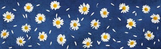 Красивая предпосылка с маргариткой цветка Стоковое фото RF
