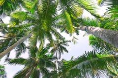Красивая предпосылка с тропическими пальмами Стоковые Изображения