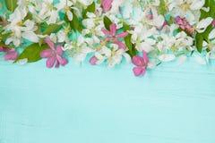 Красивая предпосылка с цветками Яблока Стоковые Фотографии RF