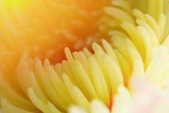 Красивая предпосылка цвета цветка Стоковая Фотография RF