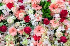 Красивая предпосылка цветков - флористическая предпосылка Стоковые Изображения RF
