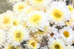 Красивая предпосылка цветков для wedding Стоковые Фотографии RF