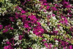 Красивая предпосылка цветков Стоковая Фотография