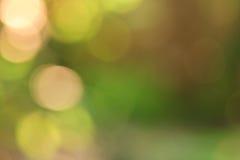 Красивая предпосылка bokeh зеленого цвета природы Стоковые Фото