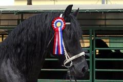 Красивая приз-выигрывая чистоплеменная лошадь friesian Стоковое Изображение