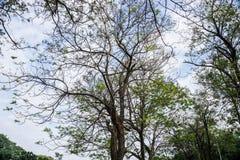 Красивая природа создает шикарное дерево в парке стоковое изображение