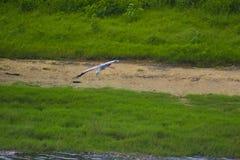 Красивая природа Шри-Ланки стоковое изображение rf
