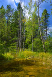 Красивая природа болота вокруг места таза национального исторического, горы серы, национального парка Banff, Banff, Альберты, Кан Стоковые Изображения