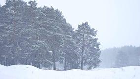 Красивая природа дерева вьюги рождества в ландшафте зимы в последнем вечере в ландшафте снежностей Стоковые Фотографии RF