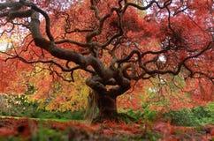 Красивая природа деревьев Стоковое фото RF