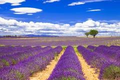 Красивая Провансаль с зацветая lavander Франция Стоковое Изображение RF