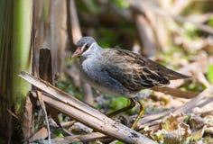 Красивая птица в лагунах Стоковые Изображения RF
