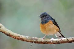 Красивая птица в одичалом Стоковые Фото