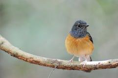 Красивая птица в одичалом Стоковые Изображения