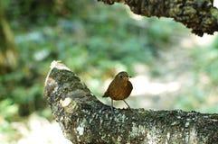Красивая птица в одичалом Стоковое Изображение RF