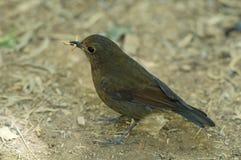 Красивая птица в одичалом Стоковое фото RF