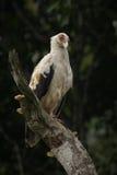 Красивая птица в славной природе Стоковая Фотография RF