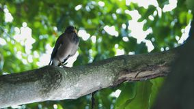 Красивая птица на дереве в Малайзии сток-видео