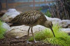 Красивая птица на камнях Стоковое Изображение