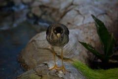 Красивая птица на предпосылке Стоковые Изображения