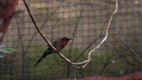 Красивая птица очень покрасила сидеть на веревочке акции видеоматериалы