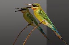 Красивая птица с тенью Стоковая Фотография