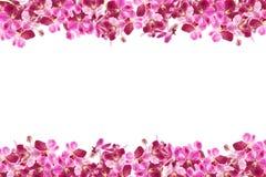 Красивая рамка цветка орхидеи на белой предпосылке Стоковое Изображение