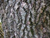 Красивая расшива с зеленым мхом Стоковое Фото