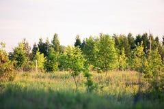 Красивая древесина в солнце захода солнца Стоковое Изображение RF