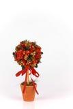 Красивая рождественская елка на белой предпосылке Стоковое Фото