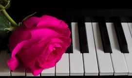 Красивая роза на ключах рояля Romance, торжество, открытка День матери, день рождения, 8-ое марта, день Валентайн Внимание, дата, стоковые фото