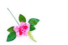 Красивая роза пинка изолированная на белой предпосылке Стоковое фото RF