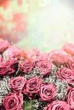 Красивая розовая бледная предпосылка роз Стоковое фото RF