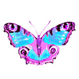 Красивая розовая голубая бабочка, изолированная на белизне Стоковое Изображение