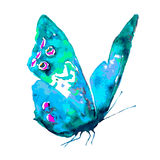 Красивая розовая голубая бабочка, изолированная на белизне Стоковые Фотографии RF