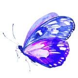Красивая розовая голубая бабочка, изолированная на белизне иллюстрация штока