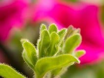 Красивая розовая нерезкость предпосылки Стоковое Изображение RF