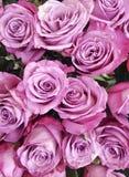 Красивая розовая предпосылка романтичная, замужество роз, свежесть Стоковые Изображения RF